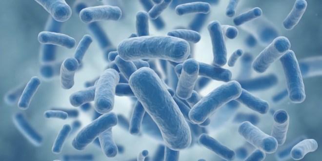 bactérie_résistant_aux_antibiotiques_2015