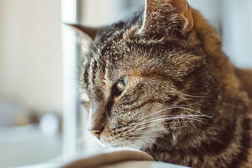 Cats-008