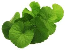 Obat Herbal Penyakit Demensia