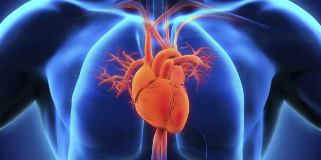 valve-cardiaque