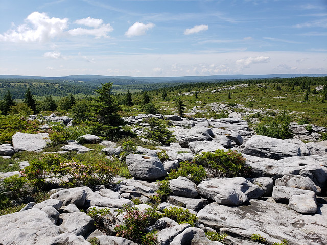 2018-06-30_Dolly_Sods_7