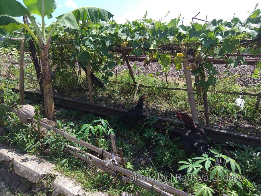 Foto Jalur Rel Mati Bandung (Kiaracondong-Karees): Rel Tertutup Tanaman #2