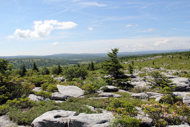 2018-06-30_Dolly_Sods_15