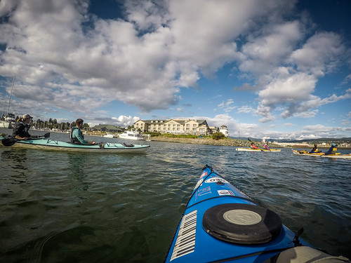 Bellingham Harbor with Moondance Kayaks-6