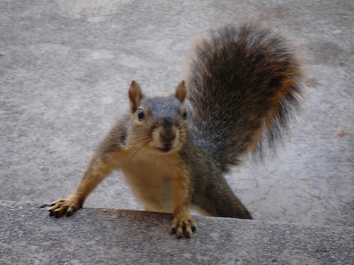 Squirrel - The picture that almost was