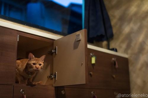 アトリエイエネコ Cat Photographer 42046534870_75fa2b61b3 1日1猫!保護猫カフェウリエルへ行ってきた(1/2)♪ 1日1猫!  里親様募集中 猫写真 猫カフェ 猫 大阪 初心者 写真 保護猫カフェウリエル 保護猫カフェ 保護猫 中崎町 スマホ カメラ ウリエル Kitten Cute cat