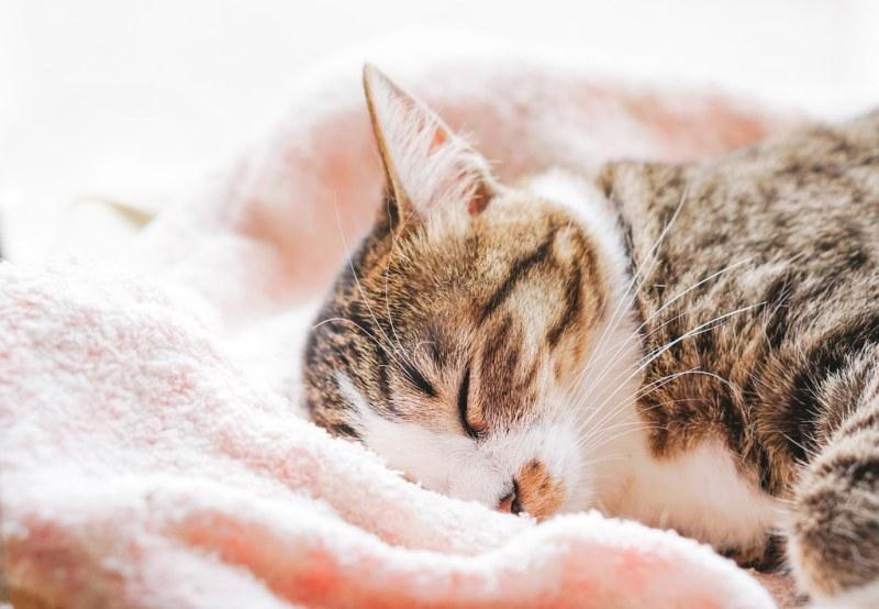 夏の快適睡眠アイテム冷やしまくら