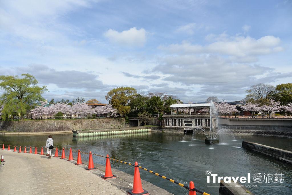 京都赏樱景点 冈崎疏水道 (2)