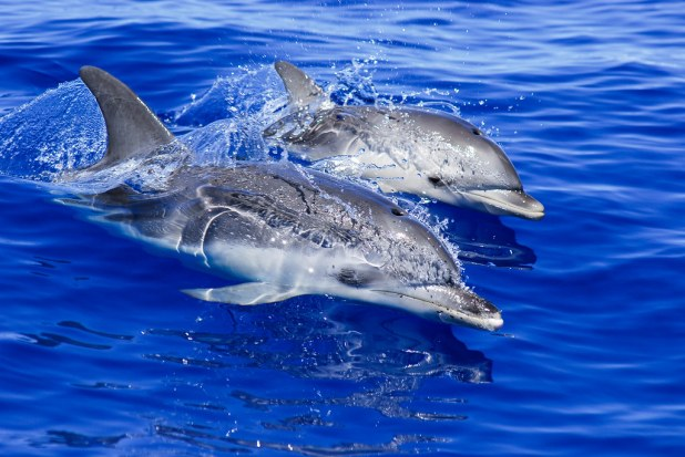 Delfines en Tenerife