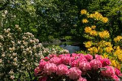 Botanischer Garten an der Oker BS