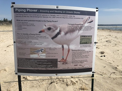 Sauble Falls - the piping plover sign