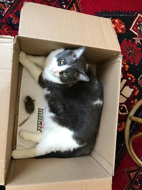 Owen Sound - Puck in a box
