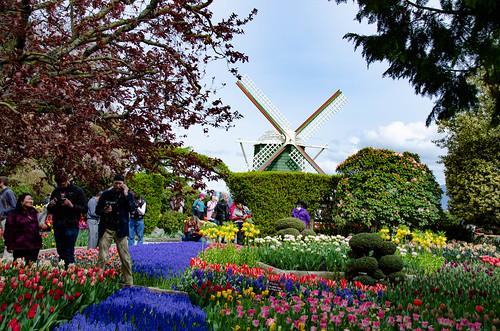 Roozengaarde Tulips-049