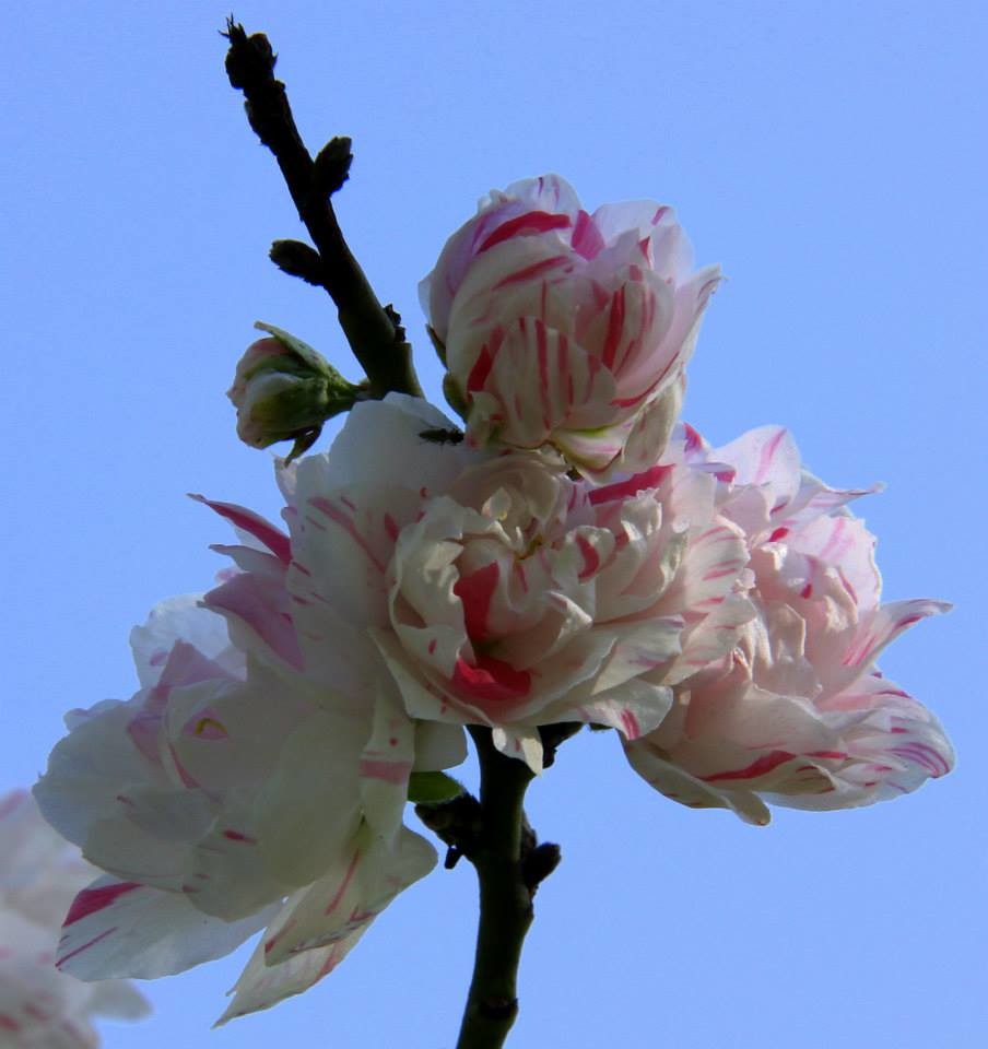 Spring in Kashmir is very beautiful