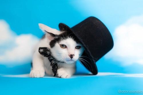 アトリエイエネコ Cat Photographer 27974429197_430b275dab 1日1猫!おおさかねこ俱楽部 里親様募集中のマッチくん♪ 1日1猫!  里親様募集中 猫写真 猫カフェ 猫 子猫 大阪 初心者 写真 保護猫カフェ 保護猫 ニャンとぴあ スマホ カメラ おおさかねこ倶楽部 Kitten Cute cat