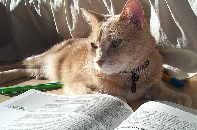 reading in the sunbeam