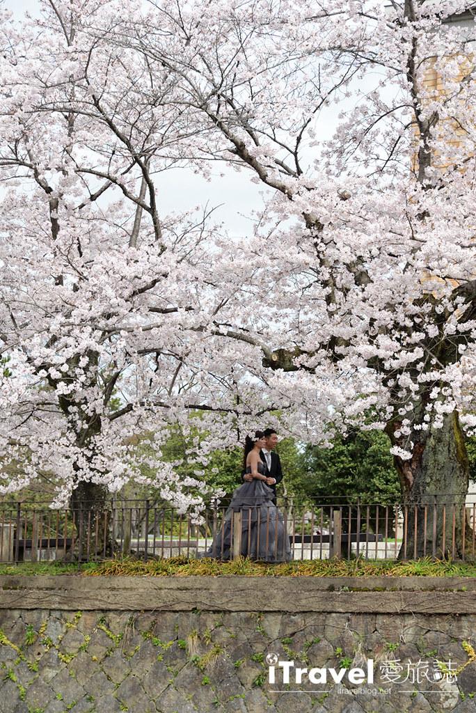 京都赏樱景点 冈崎疏水道 (38)