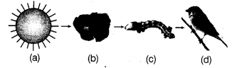 ncert-solutions-class-10th-science-chapter-15-environment-7