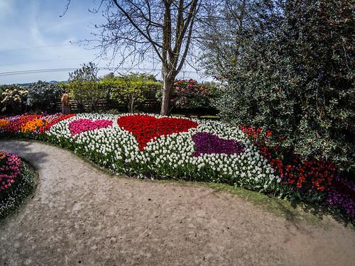 Skagit Valley Tulips-186