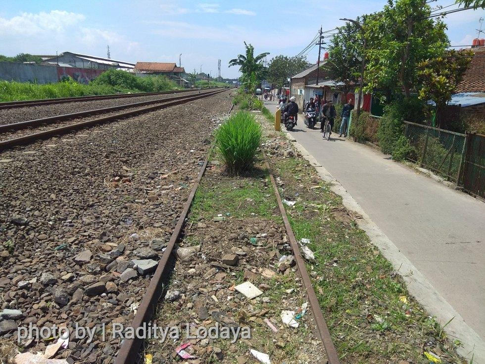 Foto Jalur Rel Mati Bandung (Kiaracondong-Karees): Rel Tertutup Tanaman