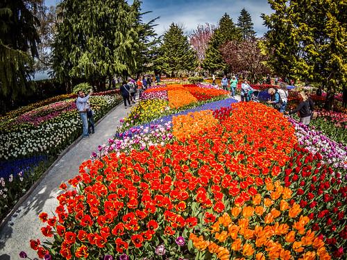 Skagit Valley Tulips-163