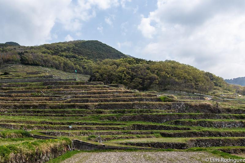 Campos de arroz Senmaida en Shodoshima
