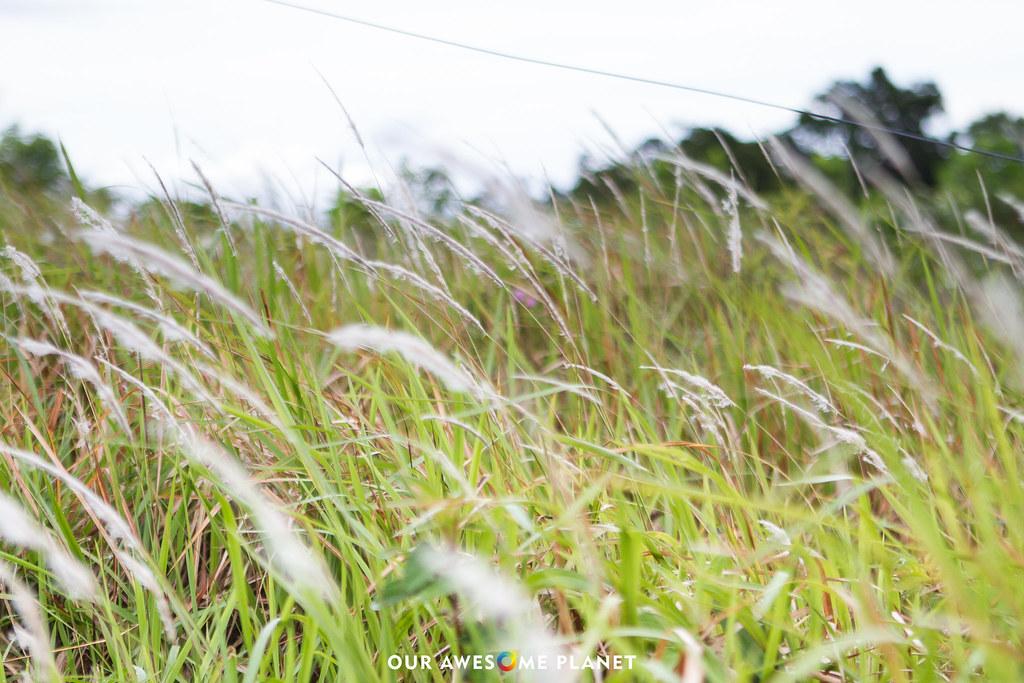 oap-huni-sicogon-7856