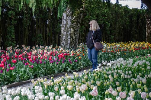 Roozengaarde Tulips-044