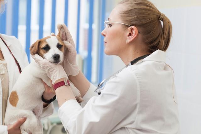 フケが多いため、病気を疑い受診した犬