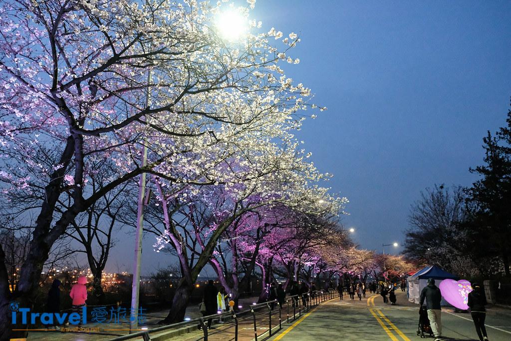 首爾賞櫻景點 汝矣島 (1)