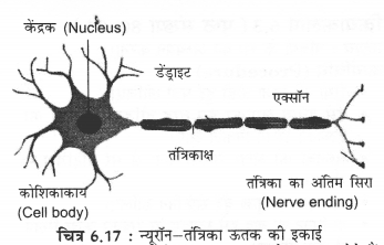 NCERT Solutions for Class 9 Science Chapter 6 (Hindi Medium) 1
