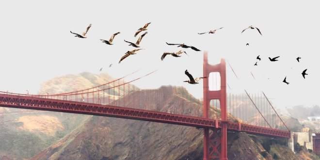 nuée-oiseaux-avions-danger