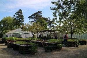 Abergs Tradgard & Café Ystad (12)