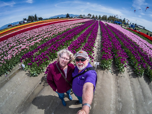 Skagit Valley Tulips-13