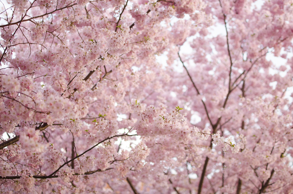 boston in bloom 11