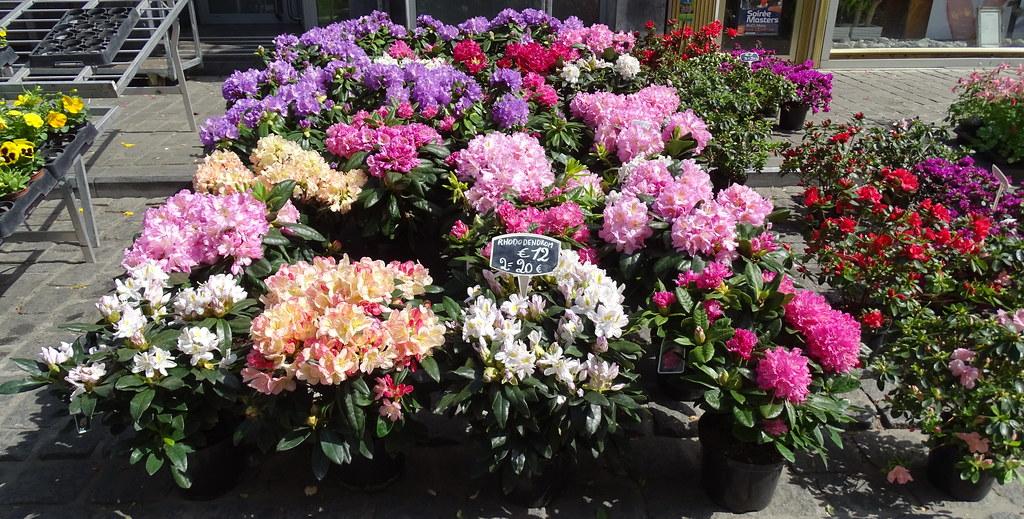 Mercado de Flores y plantas Mons Belgica 47