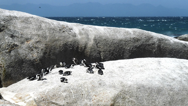 Simon's Town: Boulder Beach Pinguin Colony