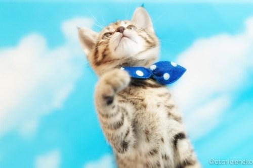 アトリエイエネコ Cat Photographer 41867870861_d4882daeaa 1日1猫!ニャンとぴあキャッツ 里親様募集中のハタくん♪ 1日1猫!  里親様募集中 猫写真 猫カフェ 猫 子猫 大阪 初心者 写真 保護猫カフェ 保護猫 ニャンとぴあ スマホ キジ猫 カメラ おおさかねこ倶楽部 Kitten Cute cat
