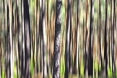 Abstract trees texture