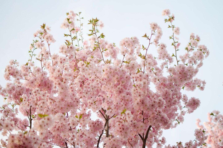 boston in bloom 14