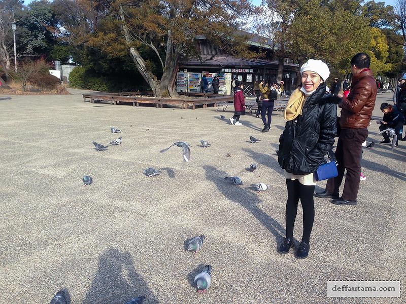 9 Hari Babymoon ke Jepang - Pigeons