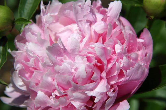 2018-05-20_WV_Botanic_Garden_18
