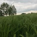 2018_05_16 _Luzernerhinterland_Beat  (121)