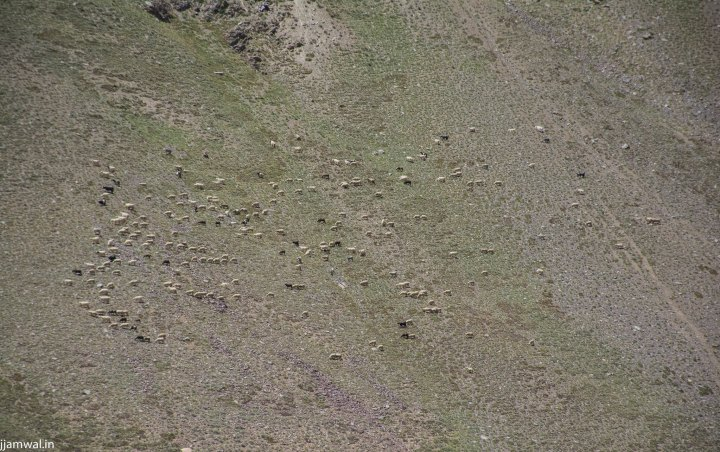 Sheep and goats grazing on a nearby mountain