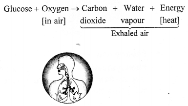 Selina Concise Chemistry Class 6 ICSE Solutions - Air and Atmosphere 21