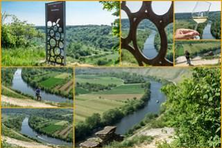 Weinsicht Neckar