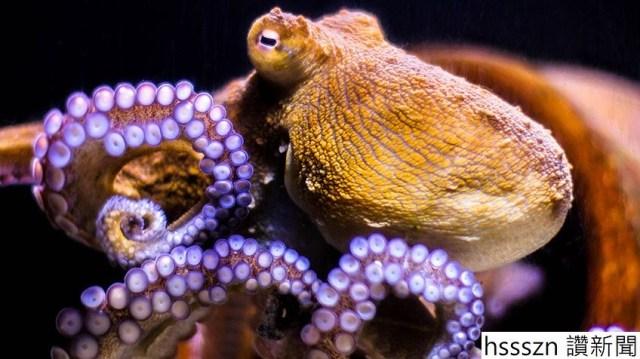 octopus_header-min_848_476