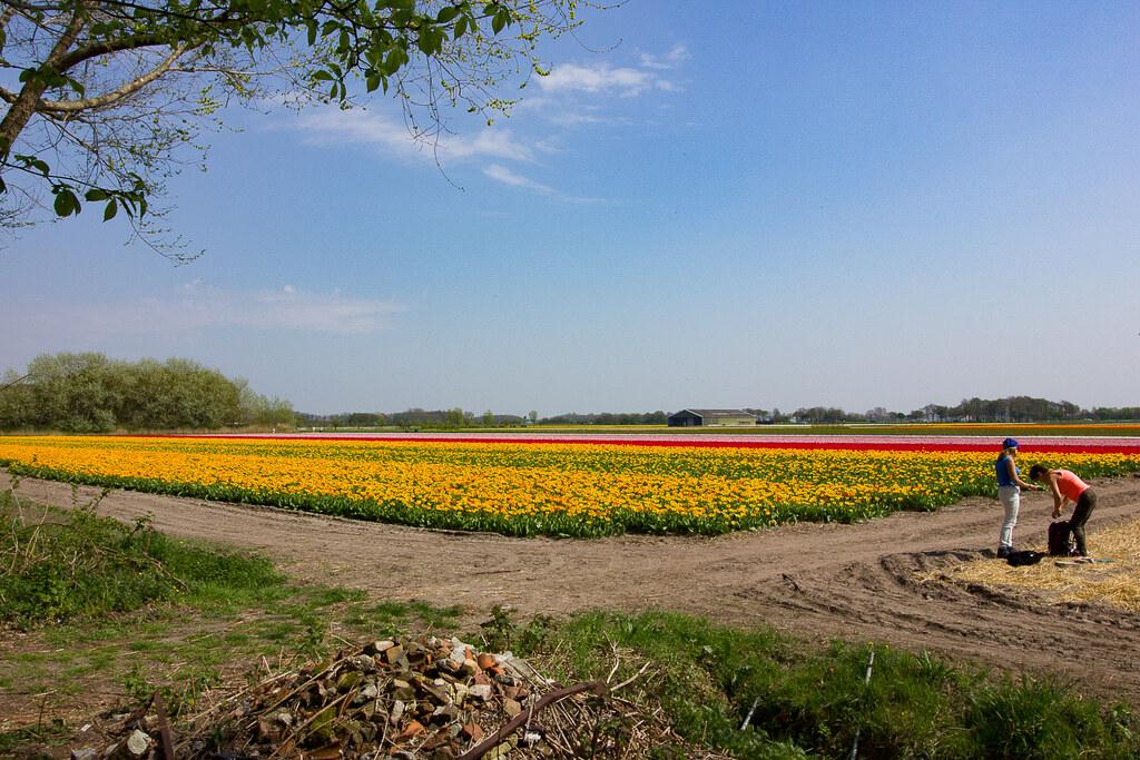 noordwijk_kukkapelto1