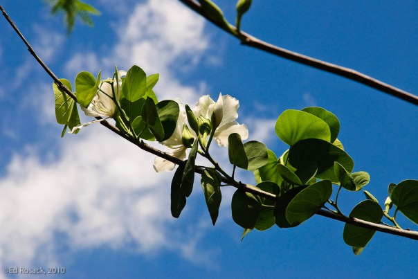 3. Flowers, leaves, sky