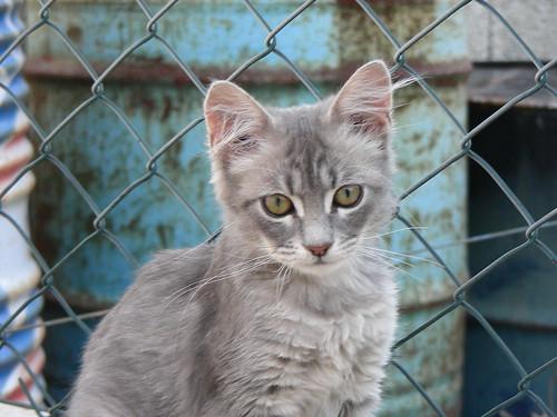 Junkyard Cat